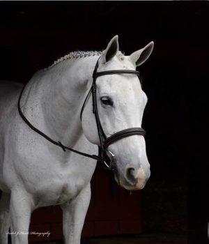 Snaffle bridled padded raised horse