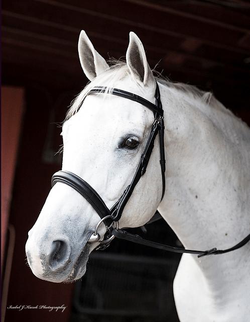 Pony Saddle Pads and Tack