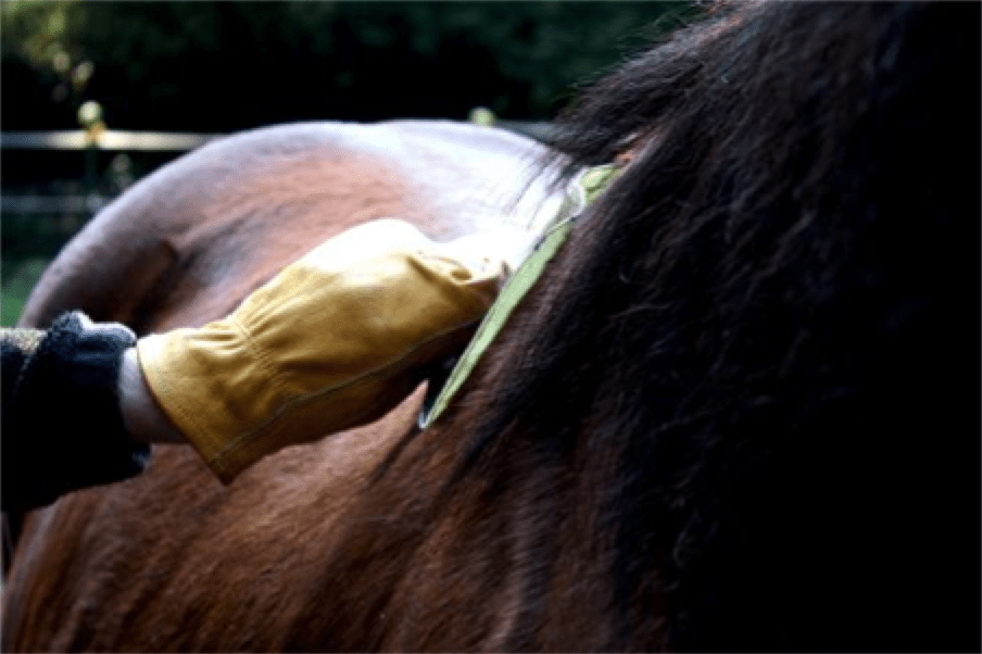 Understanding Saddle Fitting Techniques | ThinLine Global