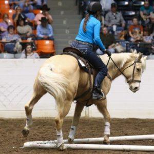 Western Horse Tack
