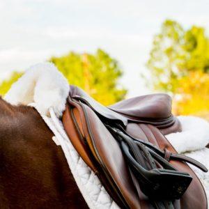 Hunter Jumper Saddle Pads & Horse Tack